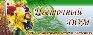 Сайт о комнатных цветах и растениях